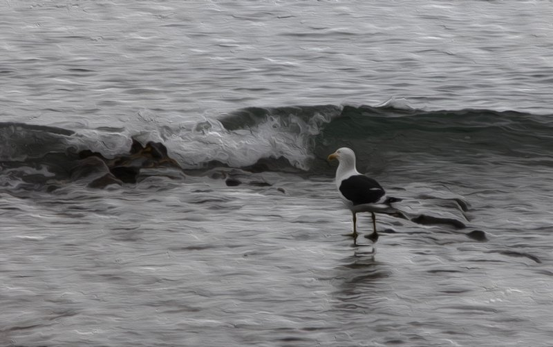 Oil-painted Gull in the Waves