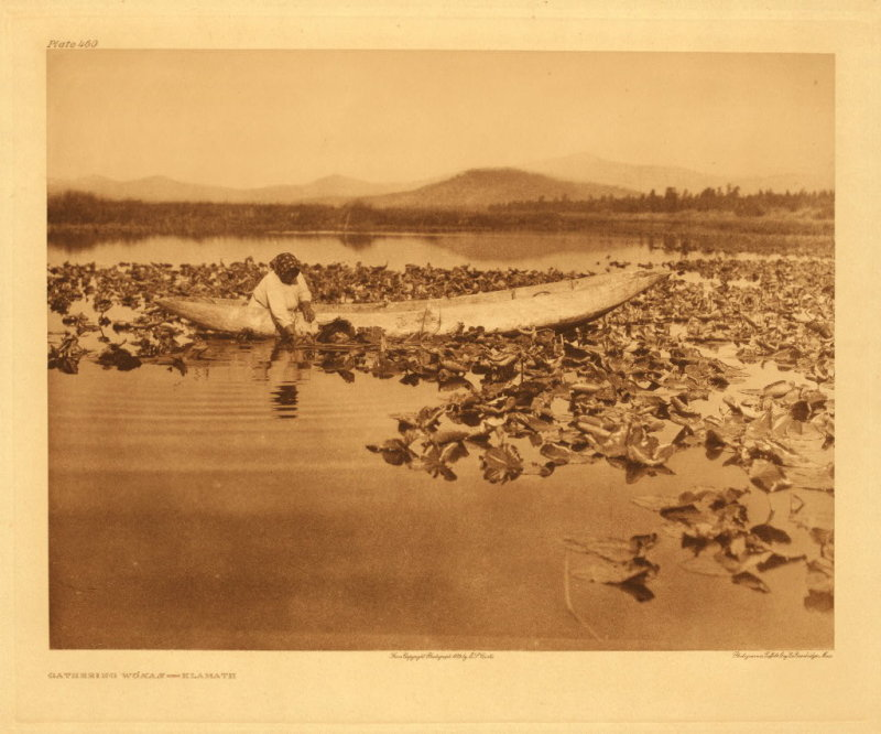 Gathering wokas - Klamath