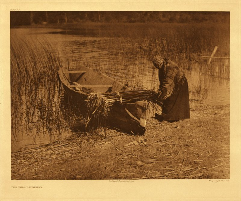 Tule gatherer - Cowichan