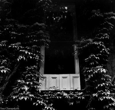 The House On 1313 Mockingbird Lane