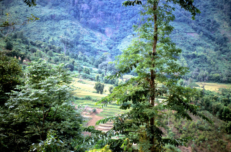 Scenery in Luang Prabang Province