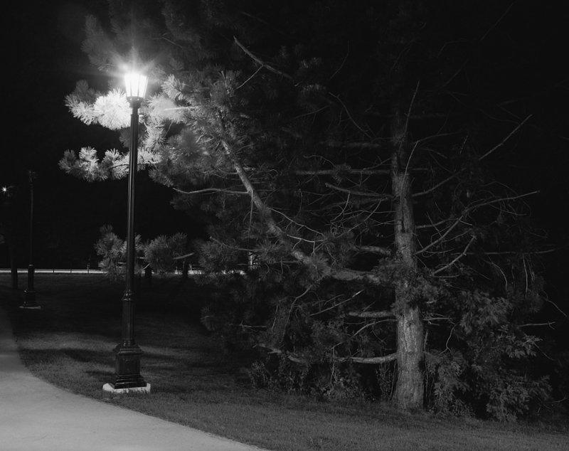 Tree & Lantern