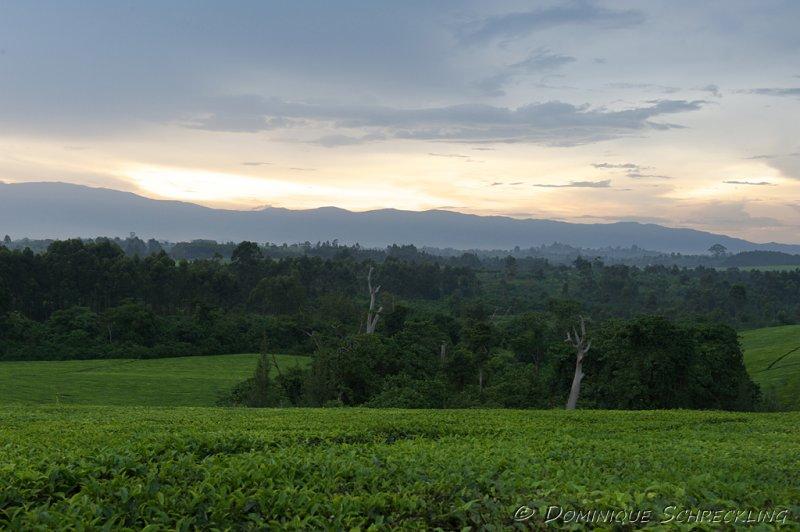 Distant view on Rwenzori