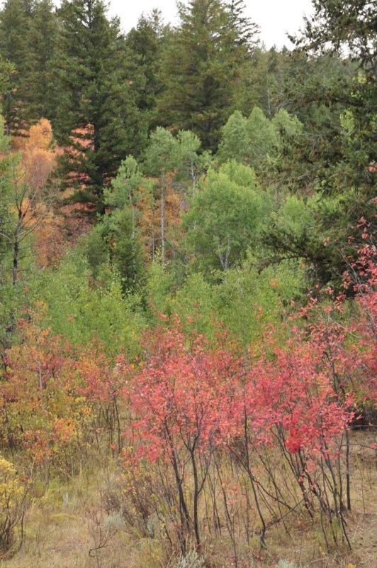Autumn 2008 _DSC9648.jpg