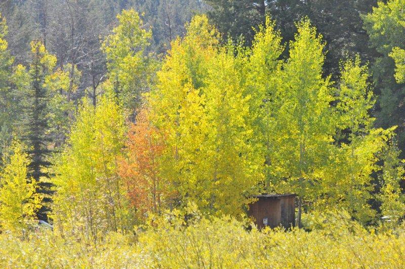 Autumn at Home _DSC9865.jpg