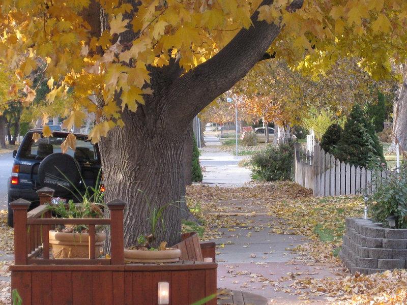 Autumn along Seventh Avenue IMG_0487.jpg