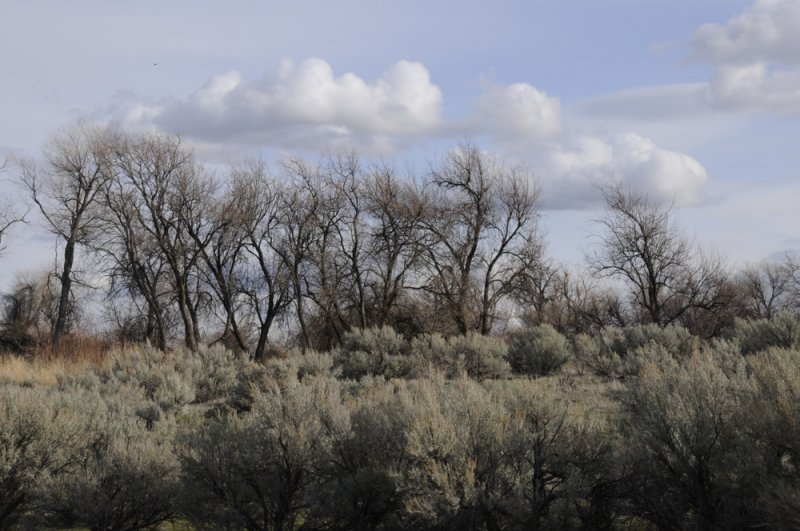 Vegetation at Malad Gorge SP SW Idaho_DSC2634.jpg