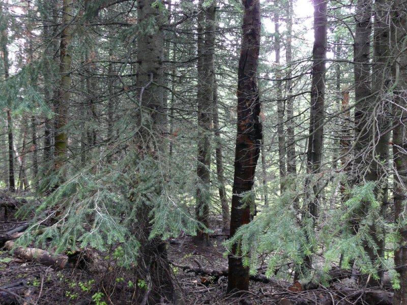 Scene from East Mink Trail P1030779.jpg