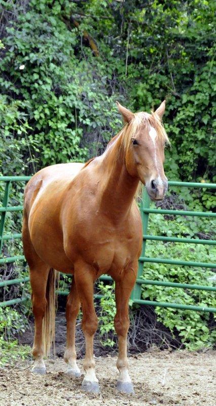 horse _DSC2579.JPG