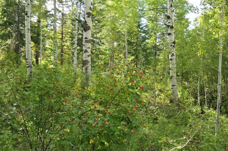 wilderness scene from east mink trail pocatello scout mountain _DSC3745.jpg