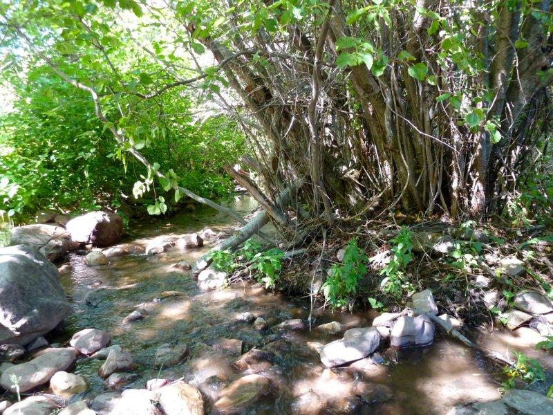 City Creek P1010320.jpg