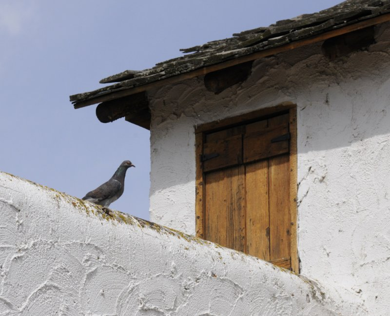 Fort Hall Replica with Resident Pigeon _DSC1705.jpg