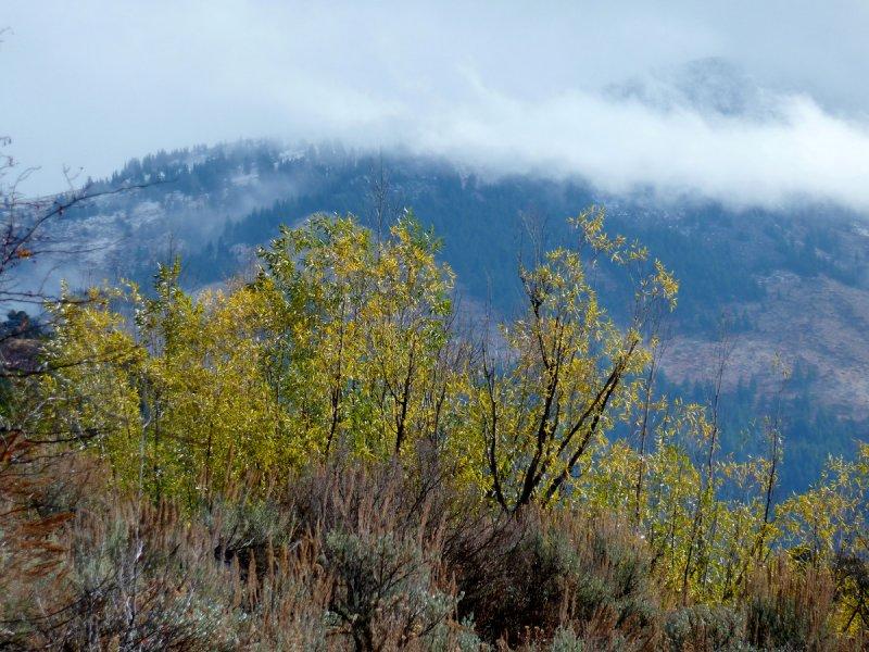 Autumn on Scout Mountain smallfile P1030229.jpg