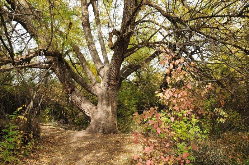 Cherry Springs tree smallfile _DSC2918.jpg