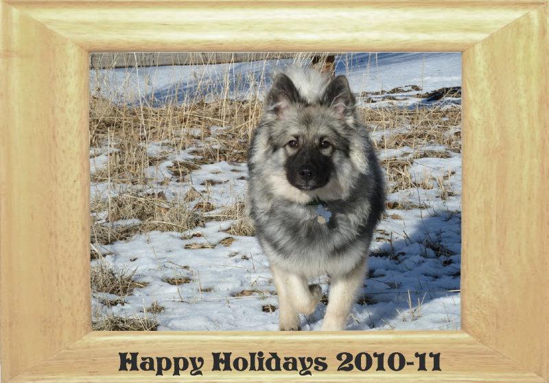 holidaycard2010 -  Wolfi der Wolfspitz