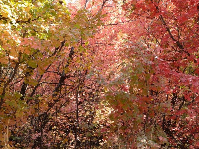 Autumn is Beginning Here in Pocatello - City Creek Area DSCF6005.jpg