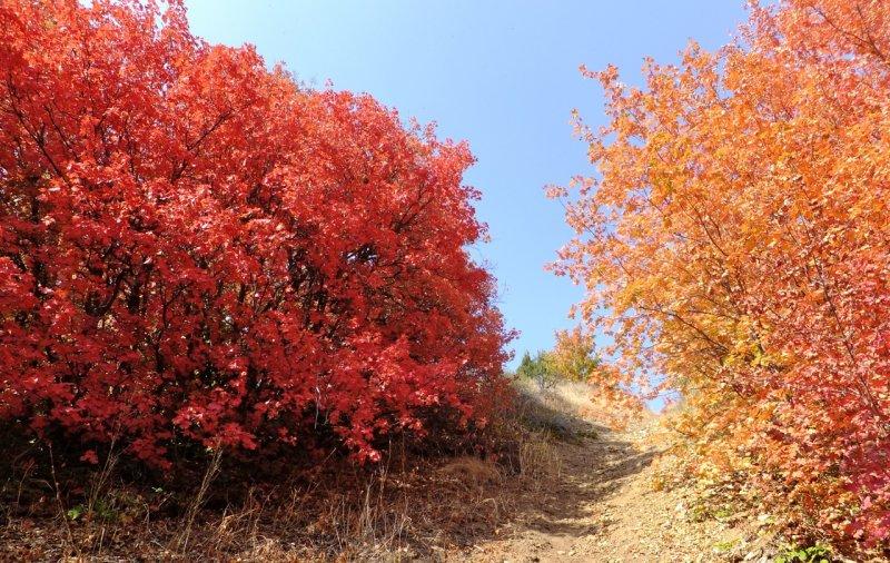 Autumn on a Trail near Kinport Road City Creek DSCF6009.jpg
