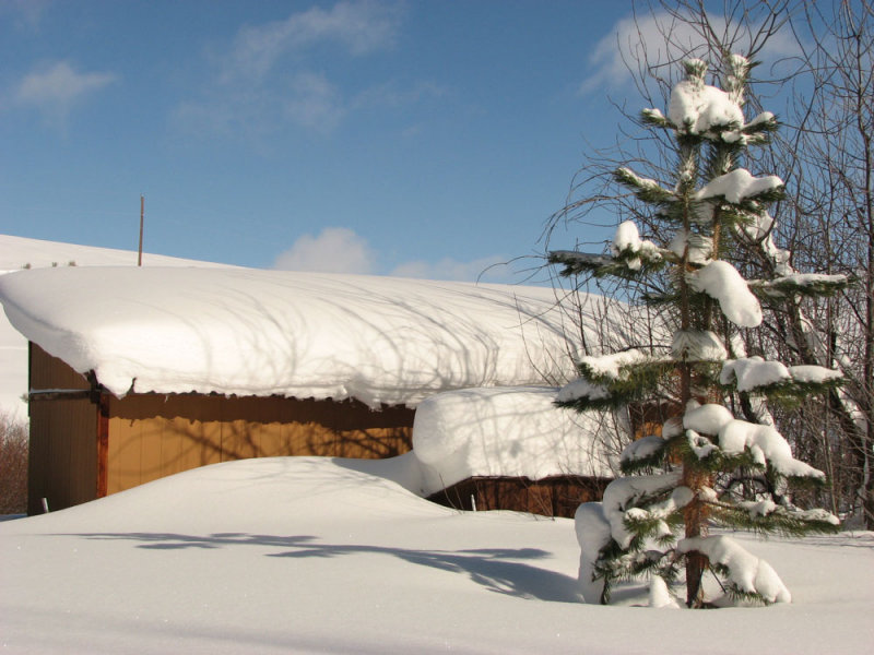 Snow Scene at Home IMG_0809.jpg