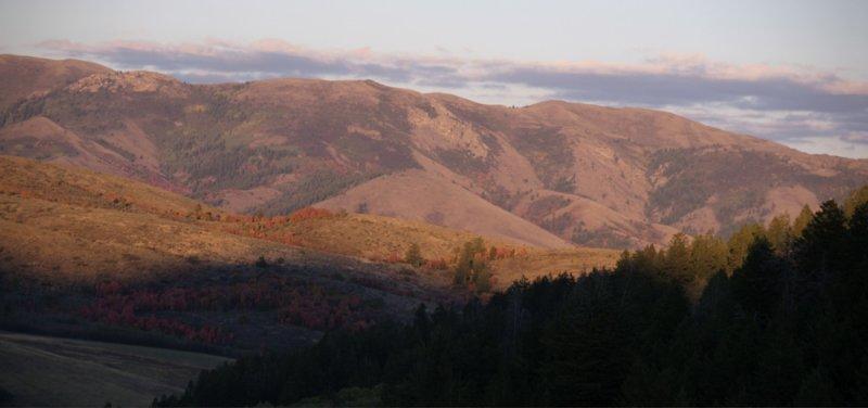 Purple Mountain Majesty _DSC0071_2.jpg