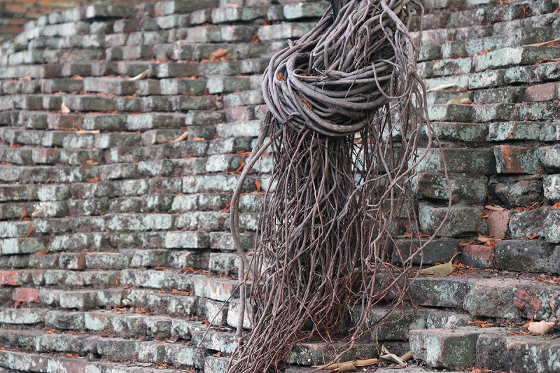 tangle on the wall.jpg