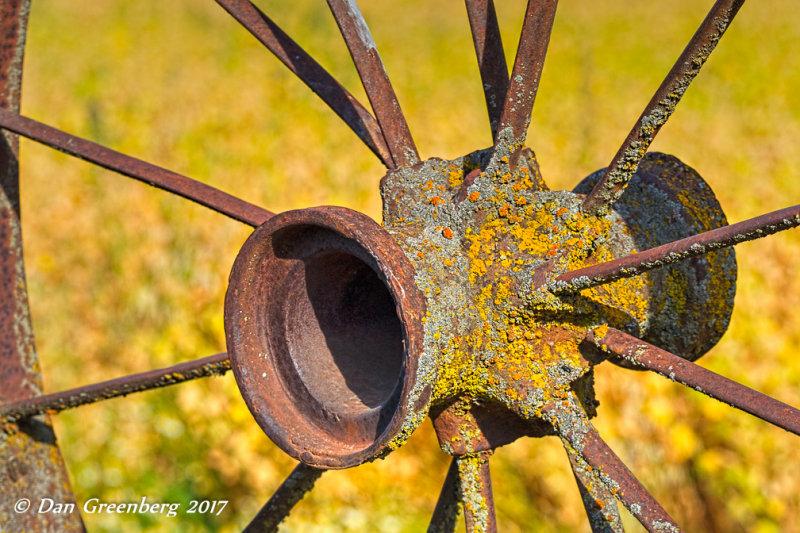 Lichens on Rust