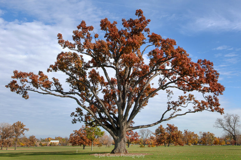 Olmsted_Oak_Del_Park_Red_jcascio.jpg