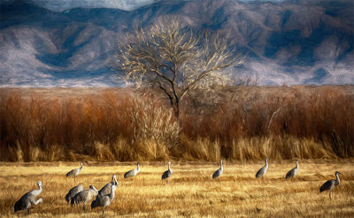 Grazing Cranes
