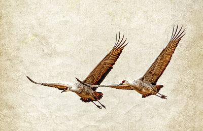Sandhill Crane Duet