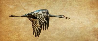 Morning Flight, Sandhill Crane