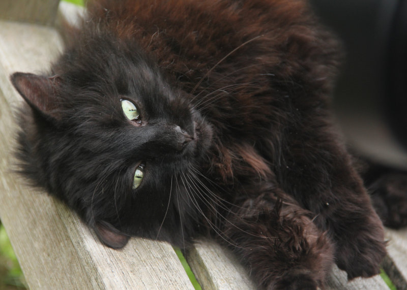 137:365<br>Highgate Cemetery Cat