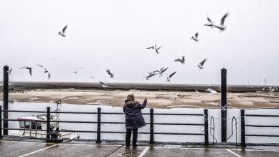 The Birds, The Birds