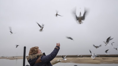 The Gulls must have some Chips( and never miss or drop a single one)