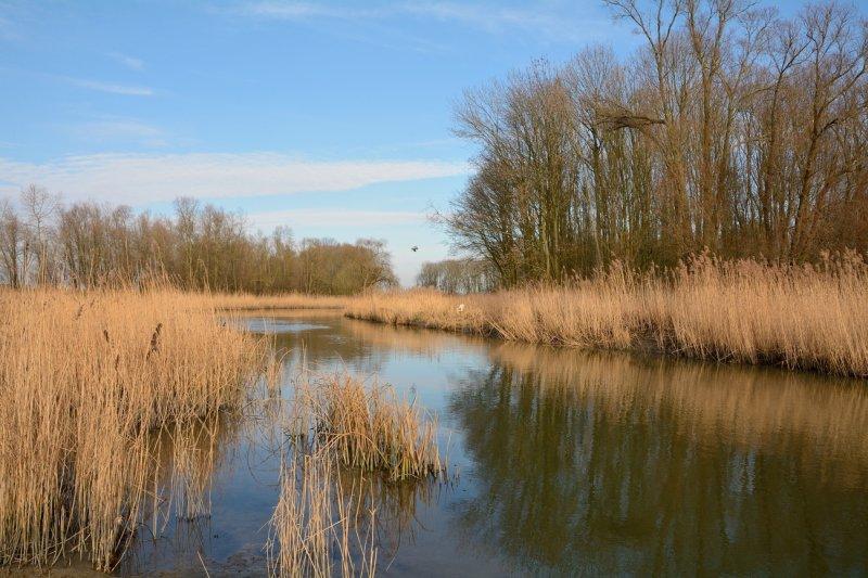 NP De Biesbosch