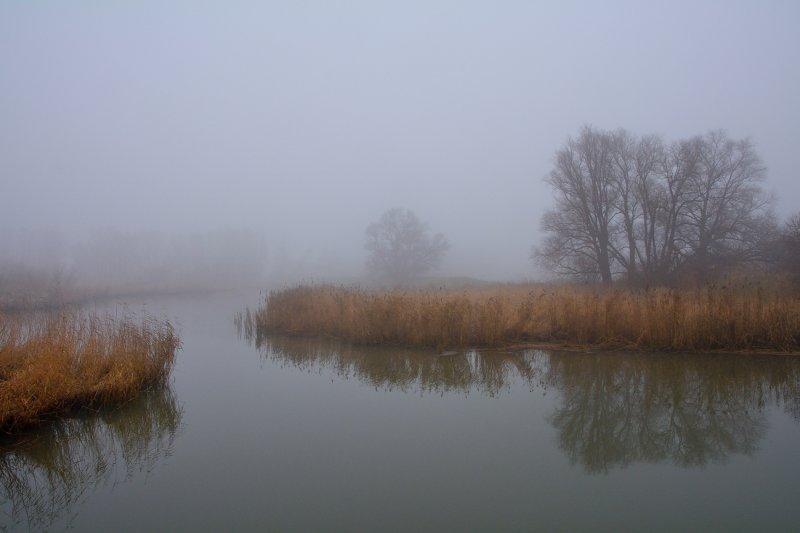 Biesbosch in de mist