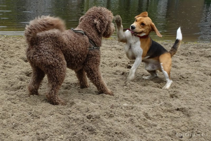 Day115_Dogs_Playing.jpg