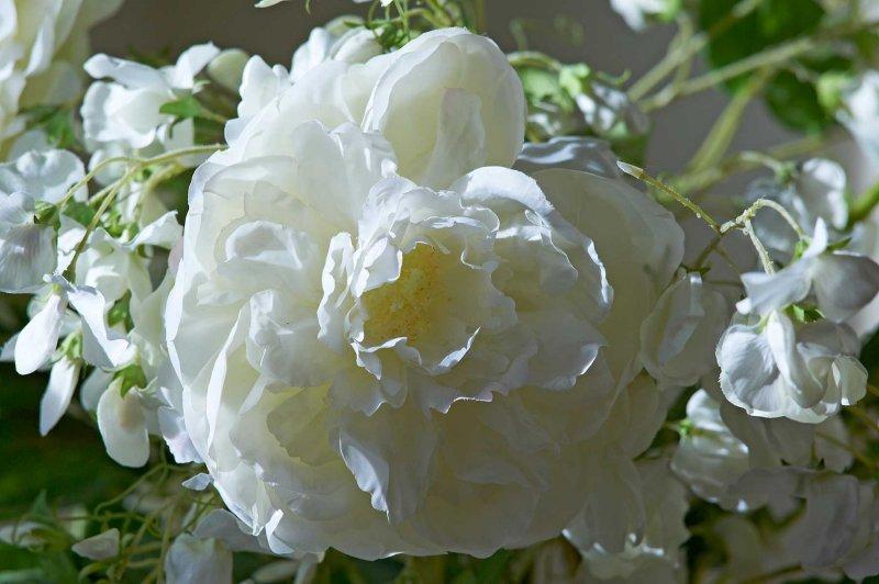 Artificial flower @f5.6 D700