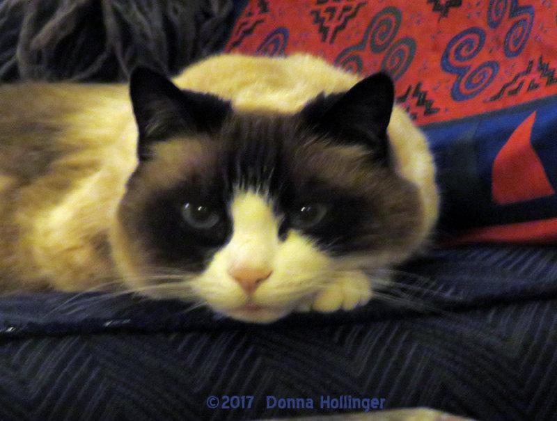 Marthas Lilicat