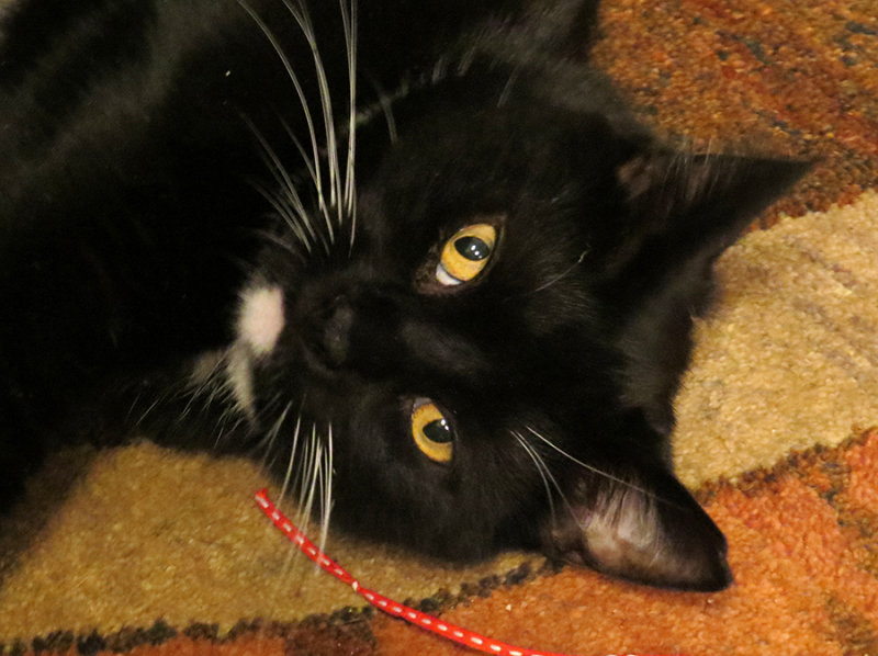 Rocky Kitty Photo Session