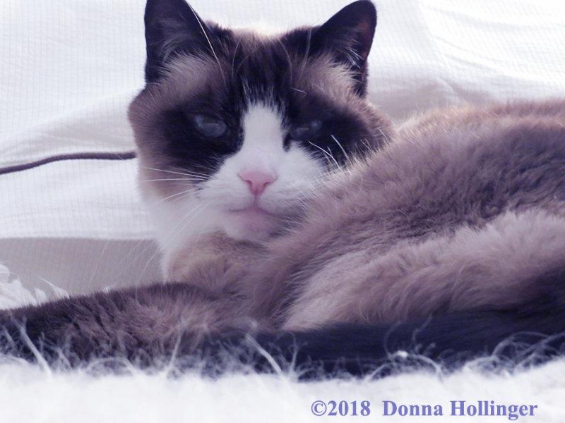 Lilicat in Bed
