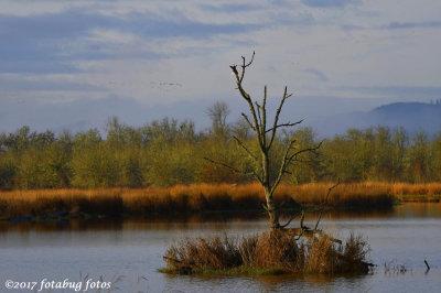 Tree in the Wetlands
