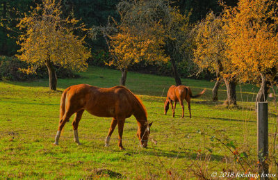 Horses in Early Afternoon Sun