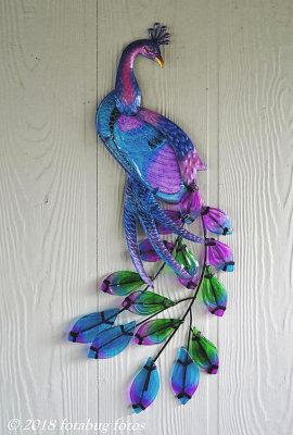 Peacock by the Door