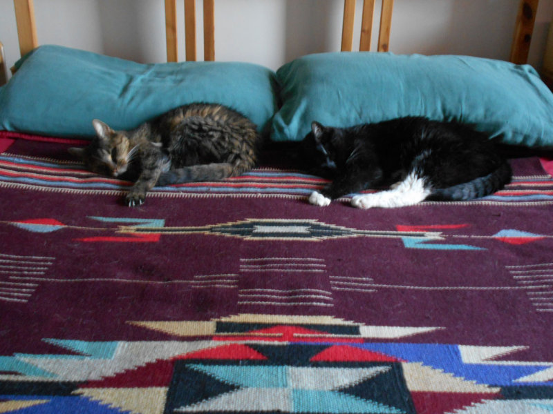 Cats DSCN9689.jpg