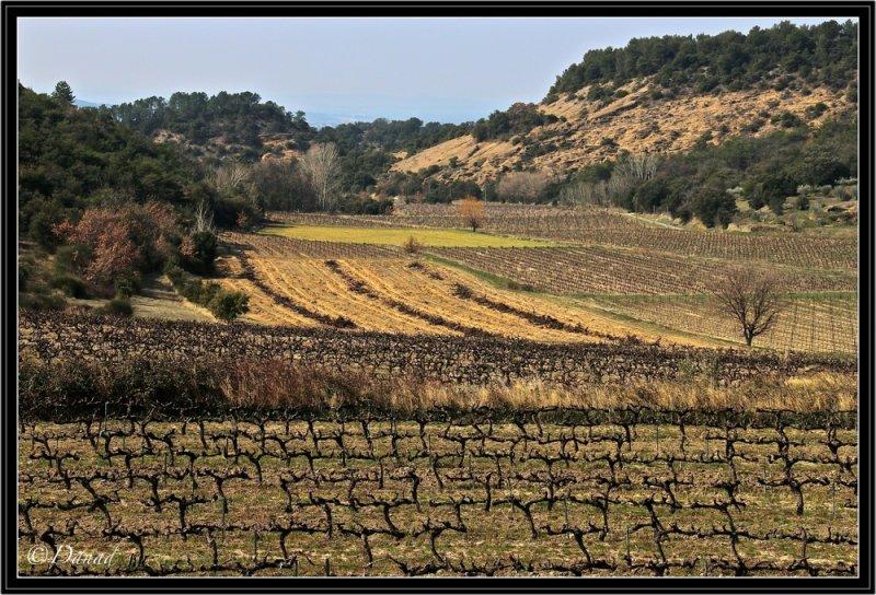 Vignes en Drôme Provençale.