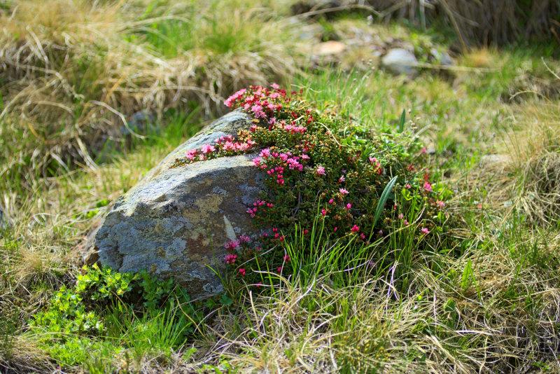 Obersee Flora