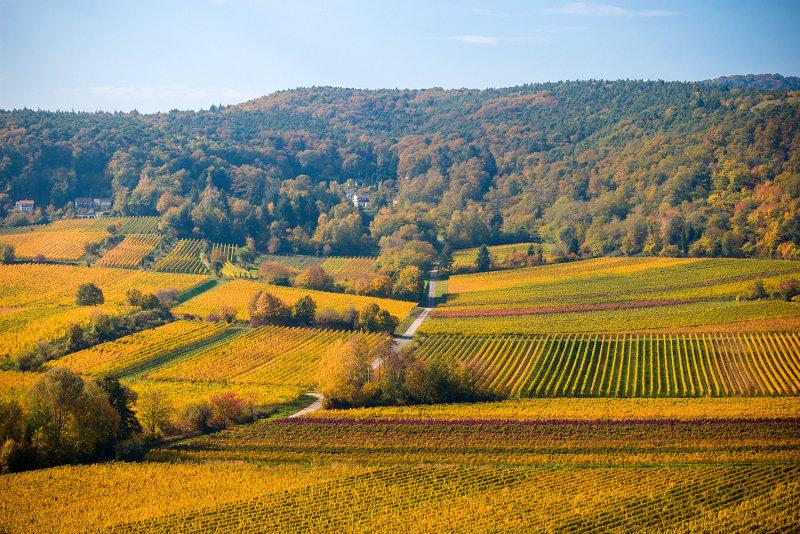 Vineyards in October