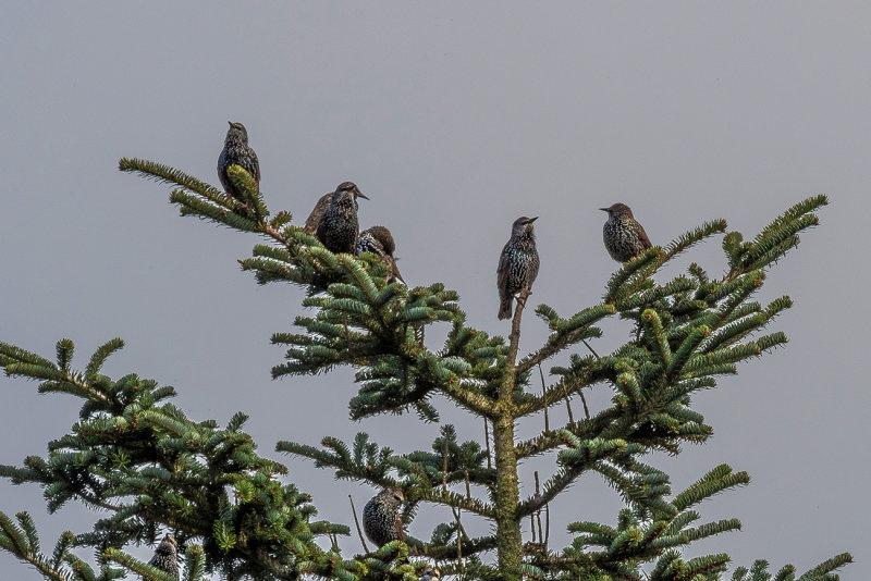 Tree Top Meeting
