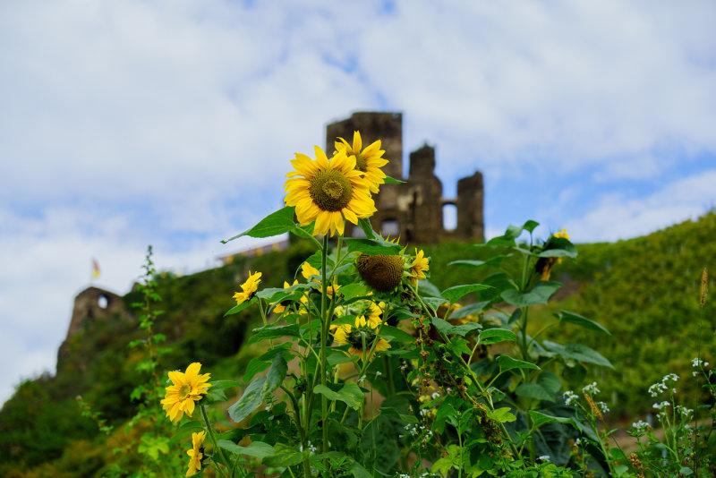 Sunflowers and Ruine
