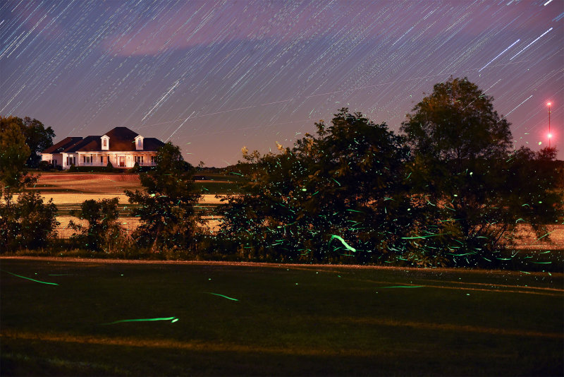 Lightning Bugs with Star Trails