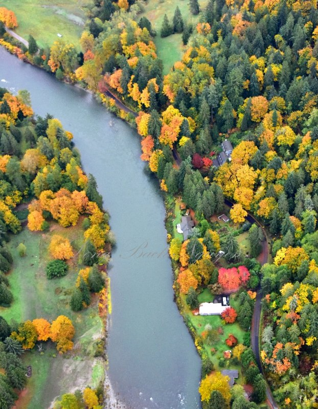 Fall Colors along Snoqualmie River by Fall City 541